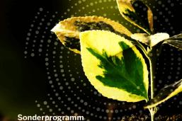 https://www.pius-info.de/aktuelles/news/nrw-umweltministerium-startet-sonderprogramm-fuer-kreislaufwirtschaft-und-ressourceneffizienz/